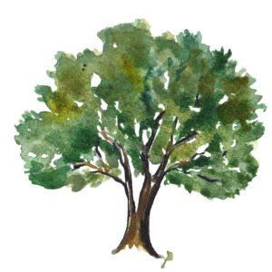 Bilancio Arboreo
